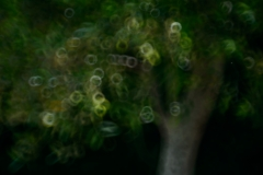 The-Olive-Tree-2